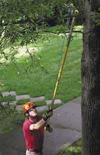 tree pruning package